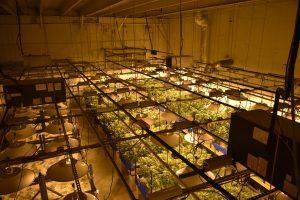 image of a grow room setup with LED grow lights