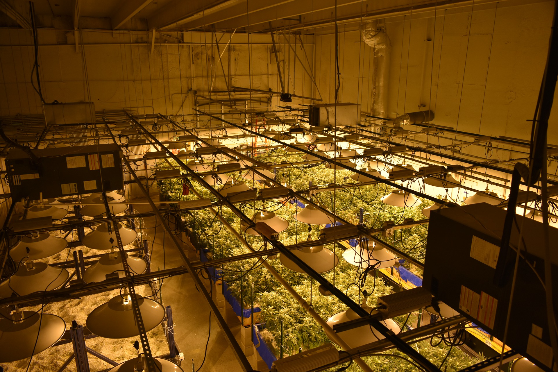 image of a grow room setup with LED grow lights